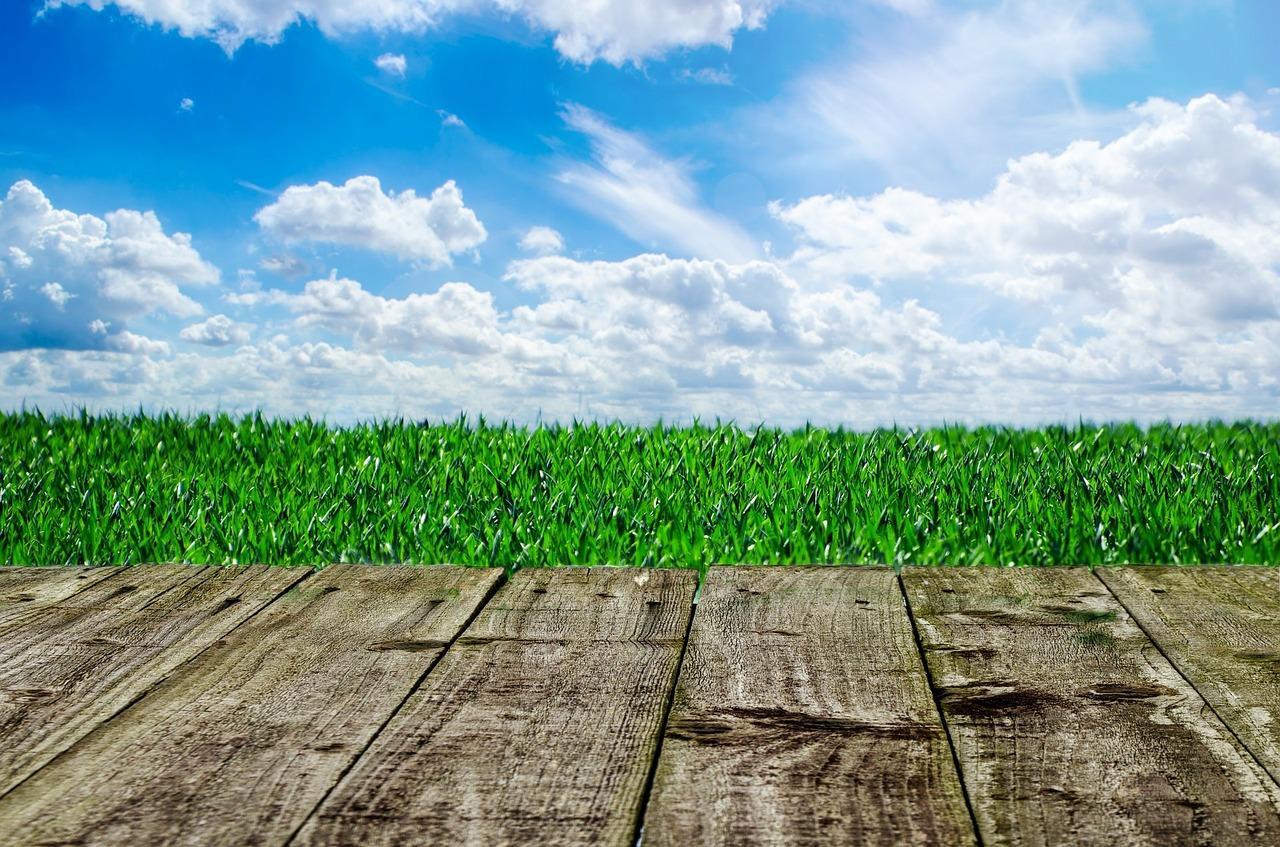 Percarbonate De Sodium Pour Terrasse Bois comment entretenir sa terrasse en bois ? – carredejardin